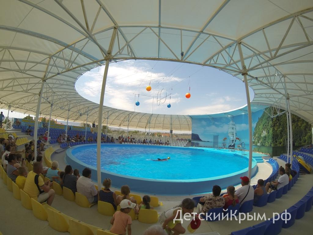 Beregovoe Krym Dolphin