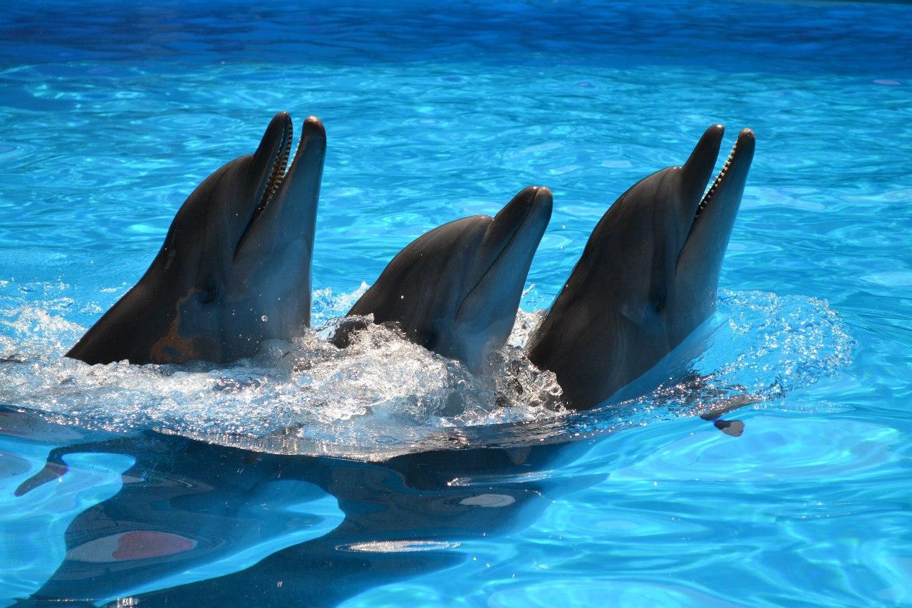 дельфинарий акварель