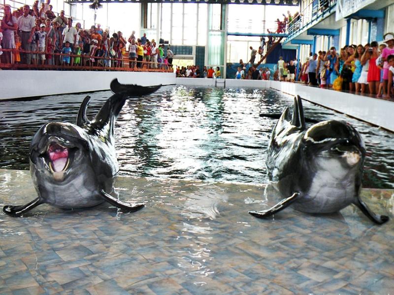 feo delfinarij