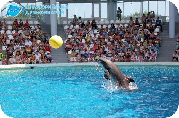 Евпатория дельфинарий