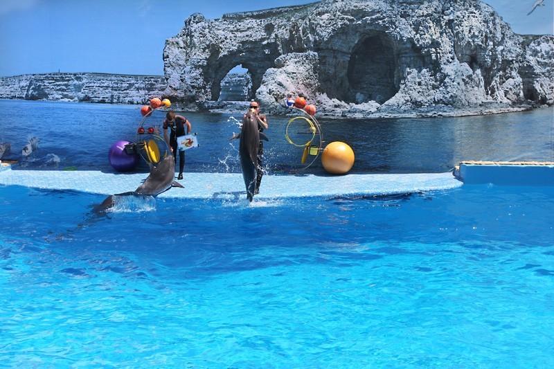 дельфинарий большой атлеш